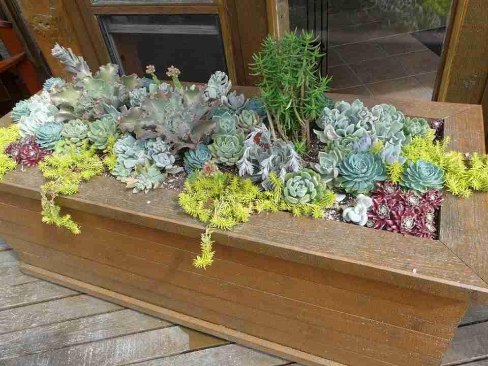 Succulent succulent planters cultivate garden gift - Rectangular succulent planter ...