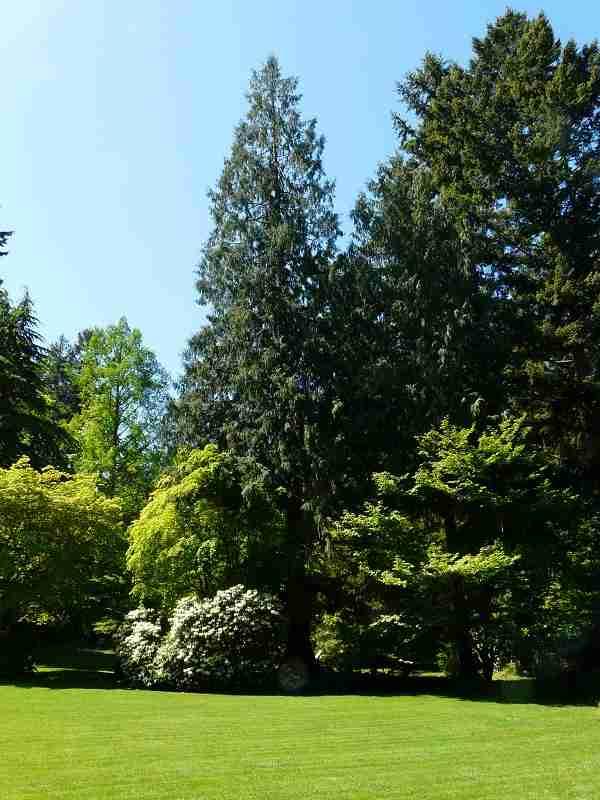 zz Milner Gardens (2)